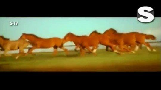 Chot Dil Pe Lagi Full Video  Ishq Vishk Shahid Shehnaz Alisha Kumar