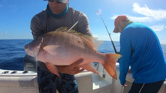 Mutton Snapper Wreck Fishing