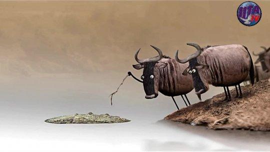 PROMO Cow vs Alagator PROMO