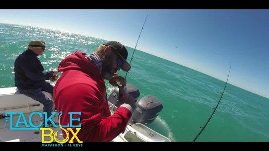 TackleBox Off Shore Feb 2020