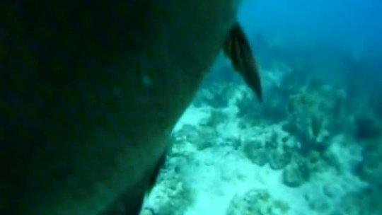 Shark Hit Me